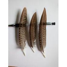 Перья фазана 10-15 см. 10 шт.