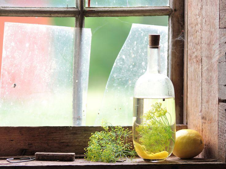 Snaps med citron och dill | Recept från Köket.se