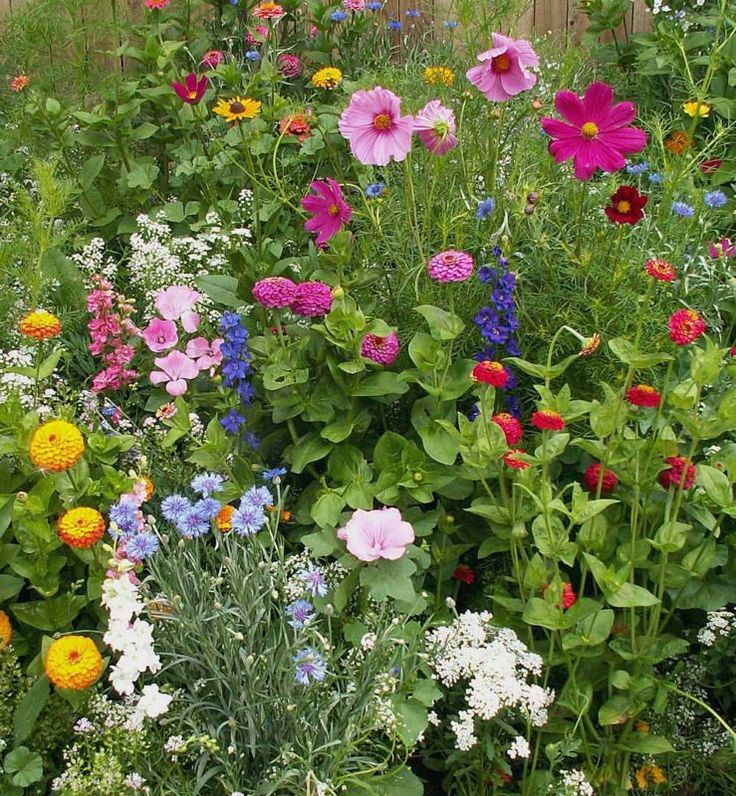 Cosmos, Zinnias, Cornflowers...perfect little cottage garden.