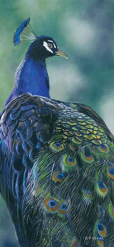 """Terry Isaac """"Full of Pride"""" c.2012 oil painting"""