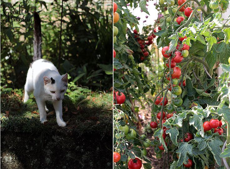 Beautiful tomatenhaus