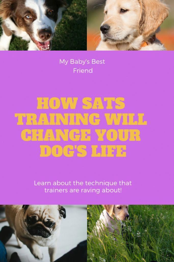 Eminent Solidified How To Train Your Dog New Improved Dog