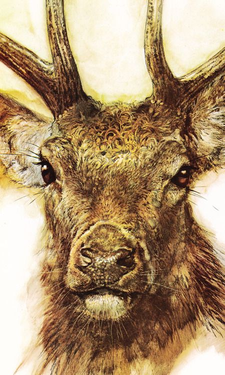 Red deer by Rien Poortvliet.  He is my favorite artist! ♥ I wish I could paint like him..