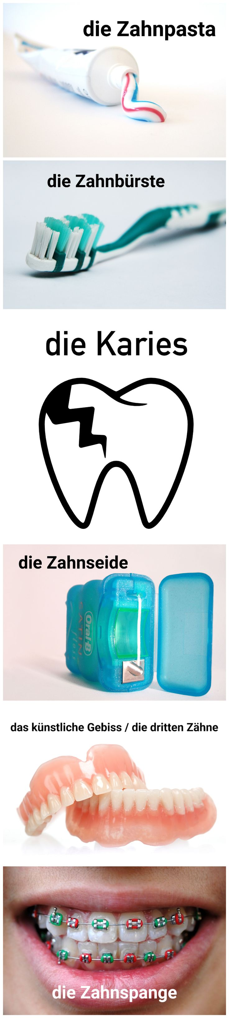 German vocabulary - Die Zähne / teeth