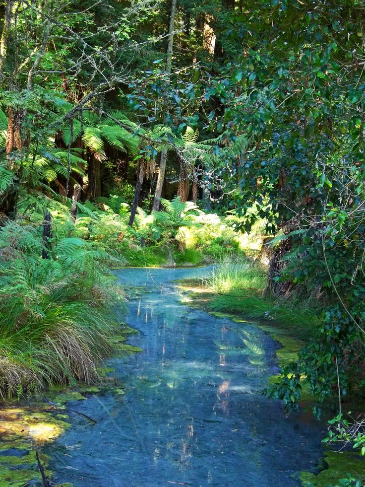 Red Woods Blue Stream. By Christy-Lynn Breetvelt