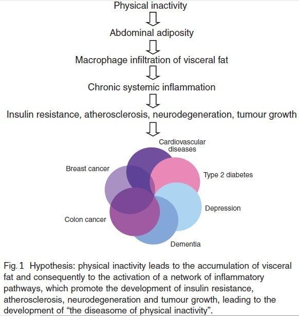 Las mioquinas son péptidos considerados citocinas (también llamadas citoquinas) producidas por el músculo esquelético en respuesta a la actividad física. Se sabe que la contracción muscular libera mioquinas al sistema circulatorio y estimula así procesos metabólicos, tales como; oxidación de grasas,...