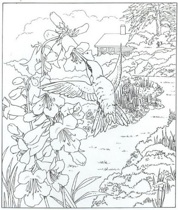 find this pin and more on coloring pages nature