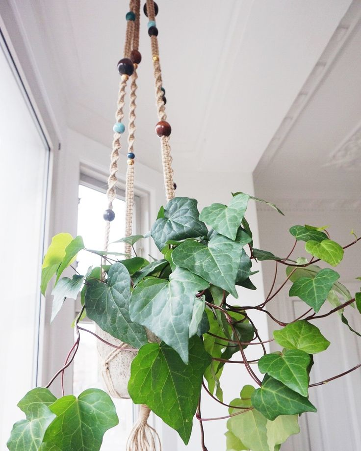 Hanging planter by PLANT Bødker & Clausen. Nørrebro Summers - Blogi | Lily.fi