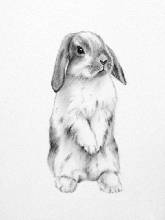 rabbit art original 5x7 charcoal lop eared bunny drawing bunny art