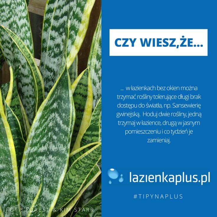 Czy wiesz, że... #tipynaplus #porady #łazienka #lazienkaplus #rośliny #decor