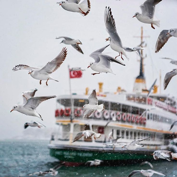 Even in winter our cute seagull friends follow us on the ferry across the Bosphorus!⠀ :hasanilkay/IG ⠀