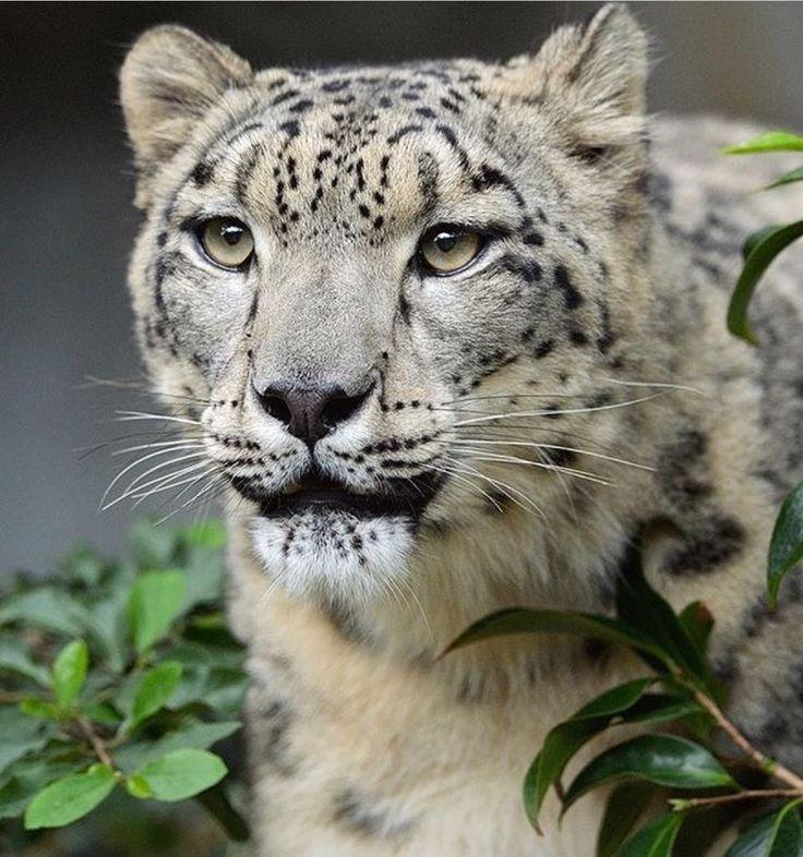 My favorite animal!                                                                                                                                                                                 Mais