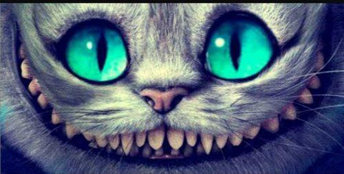 Gato de Cheshire : el gato de alicia en el pais de las maravillas  Argentina perdio, otra vez salimos segundos, pero al menos (Y no es por conformista) estos pibes lograron llegar a dos finales despues de muchisimos años de nada e igualmente los banco a todos y seguro los antimessi estan felices   ahorayya2