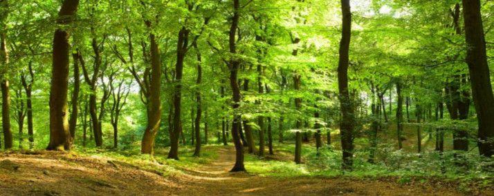 Można głosować na polskie projekty związane z ochroną przyrody - Aktualności i wydarzenia - Eko-Fani