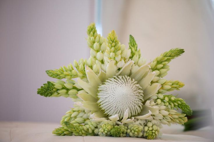 Stunning wedding bouquet includes White King Protea and Star of Bethlehem blooms. Amazing.