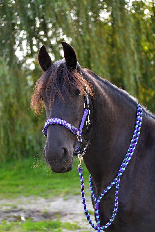 Halfter - Violett / Türkis - MH.Flechtdesign!Handgefertigte Unikate für Pferd & Hund