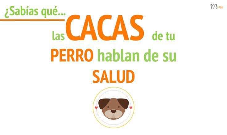 Cómo detectar enfermedades en las cacas de tu perro | Mascoweb #cacas #heces #perros #salud #enfermedades #prevención #mascotas #mascoweb #vídeo #youtube