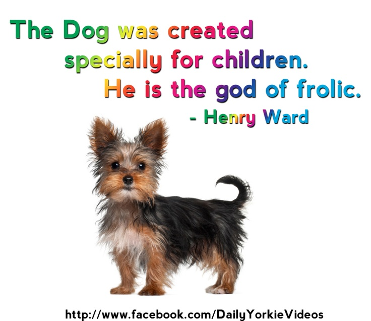 yorkie quotes 24 best yorkie quotes images on pinterest 3171