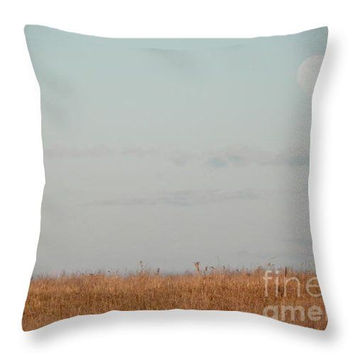 Throw Pillow Display Rack : 1000+ images about Greeting Card Rack on Pinterest Wire racks, Post card displays and For sale