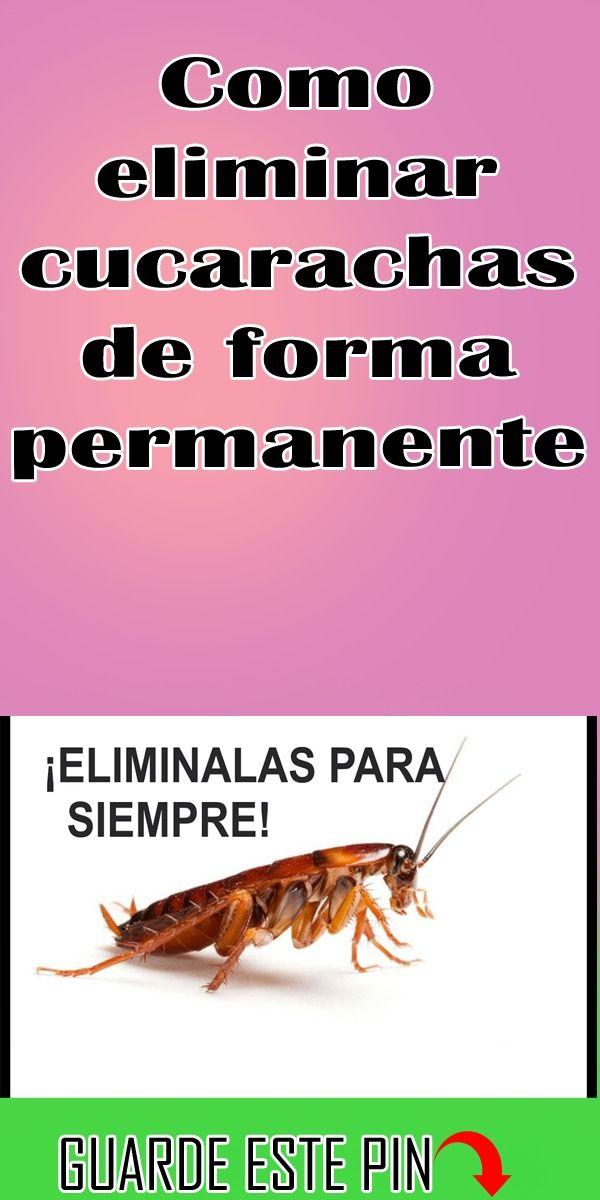 Como Eliminar Cucarachas De Forma Permanente Salud Naturales Cucarachas Eliminar Trucos De Limpieza