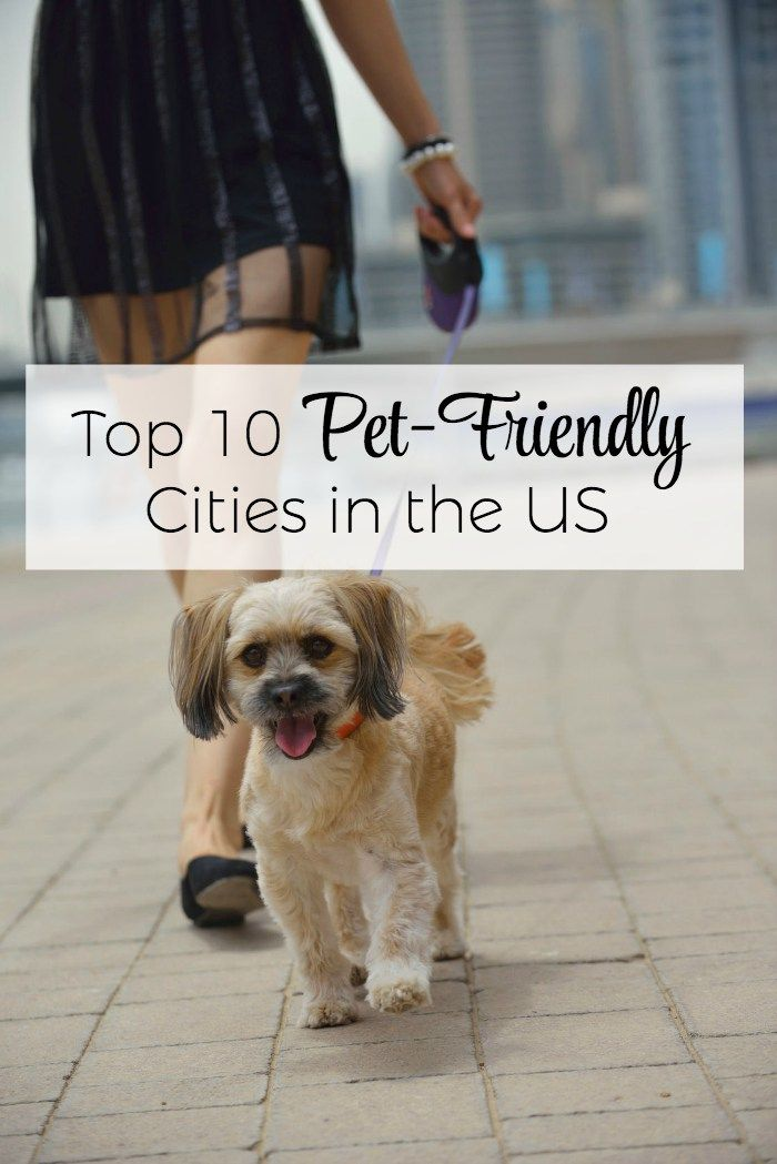 Top 10 Pet Friendly Cities In The Us For 2018 With Images Pet