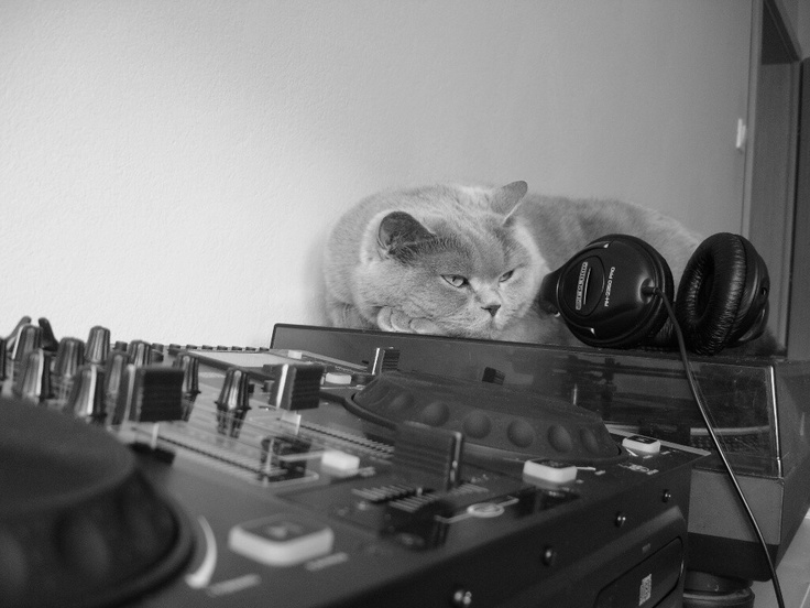 My cat loves my turntables. Especialy she loves my scratches. Funny cat.