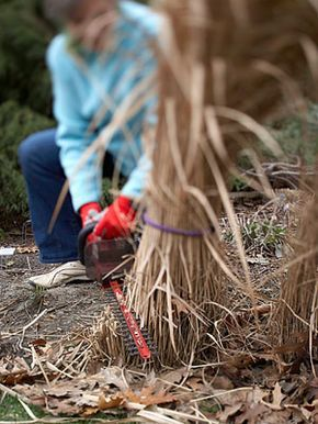 Keeping Ornamental Grasses Happy. {We wrap the grass in duct tape and use a chainsaw to cut ours down in spring.  JF}