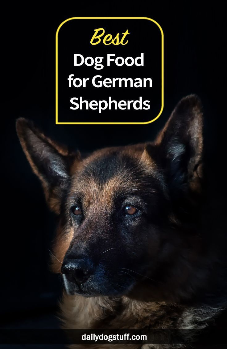 Best Dog Food For German Shepherds Best Dog Food Dog Food