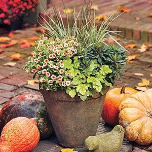 Here is a container design for shade that will take you from early fall's mild weather to the first hard freeze late in the season. 12-inch Container (1) 4.5-inch Dolce® Key Lime Pie Heuchera (1) 4.5-inch Superbells® Peach Calibrachoa (1) 4.5-inch Efanthia Euphorbia (1) Graceful Grasses™ Quartz Creek Juncus