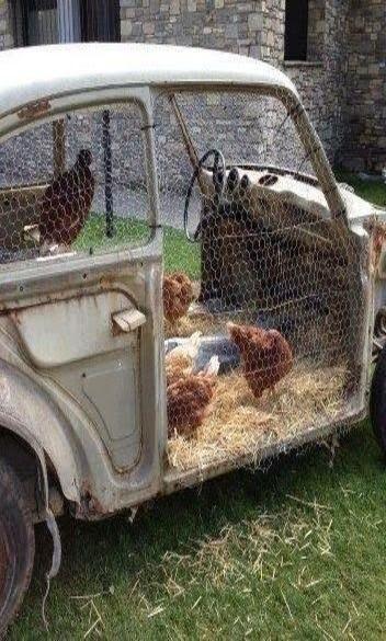 Hens at the wheel
