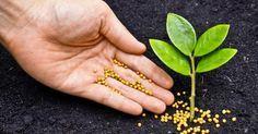 Faire son engrais maison. Il n'y a pas que les engrais chimiques qui permettent de faire pousser vos plantes. A la fois bio, écolo et économique, faire votre propre engrais représente de nombreux avantages. Voici quelques astuces pour le réaliser...