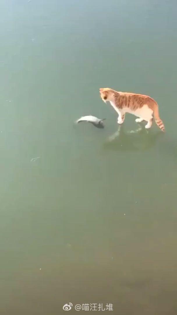 Was ist falsch an diesem Fisch?!?!? Warum kann ich es nicht bekommen?!? 😺🐠   – GIF