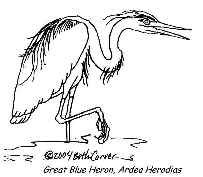blue heron coloring pages - photo#7