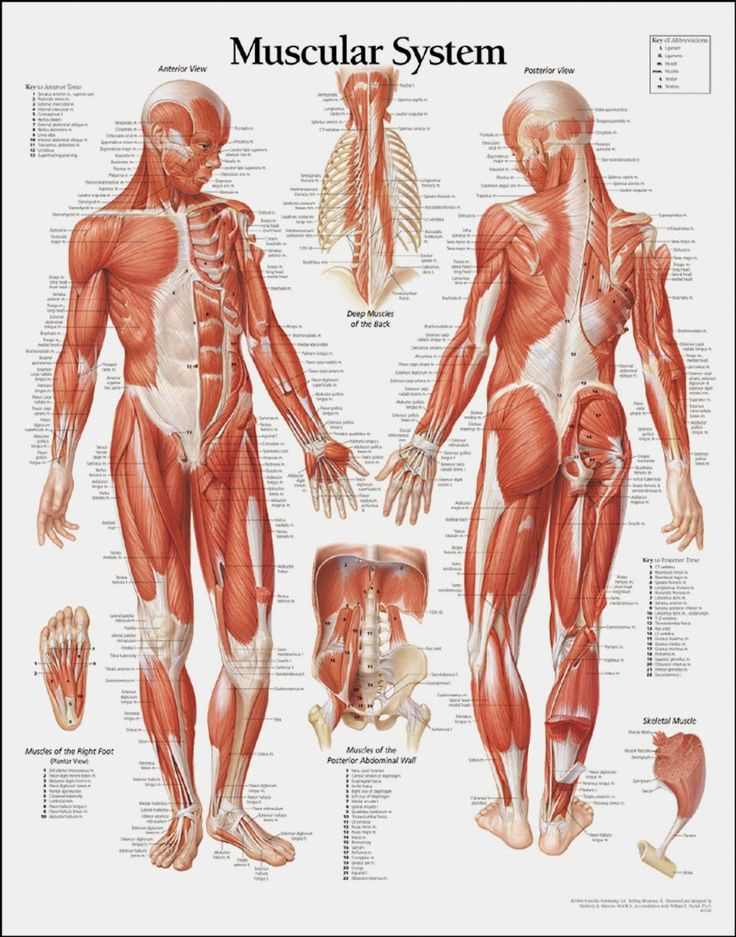 The 33 best martial arts images on Pinterest | Human anatomy ...