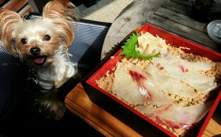 蔵のまちcafe 押し寿司 カイル レストラン