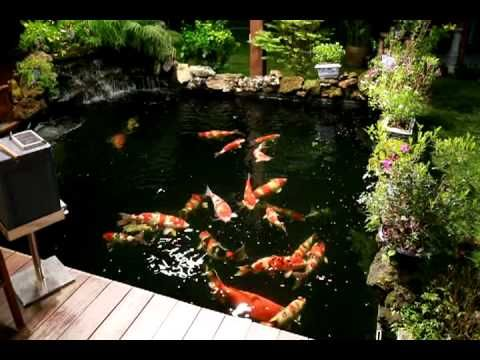 1000 images about koi and pond on pinterest swim for Koi ponds near me