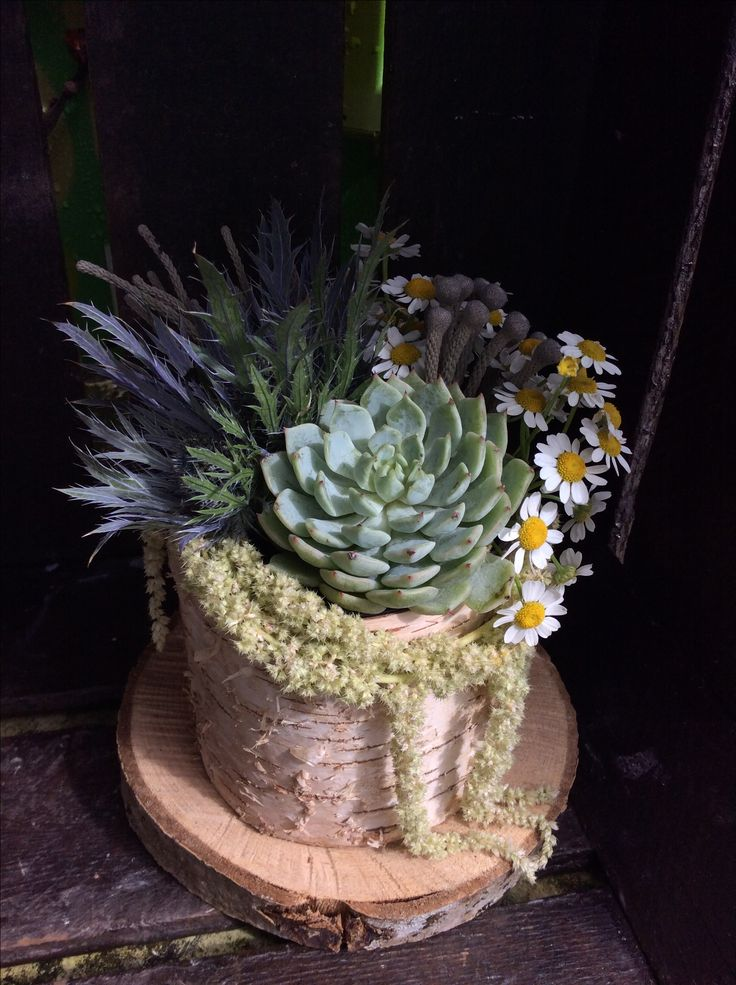Succulents and fresh flowers in bark pot.