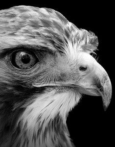 Black and White Animal Portraits by Lukas Holas