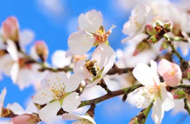 λουλούδια άνθη δέντρου