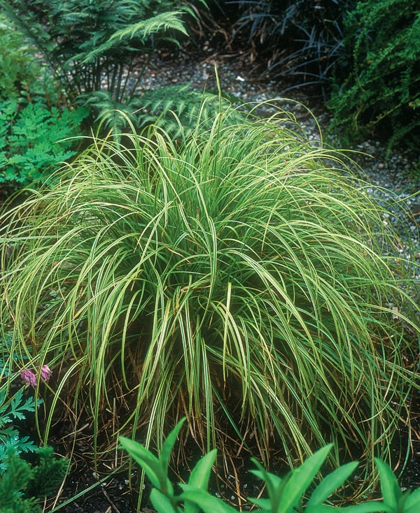 102 best images about plants for my yard on pinterest for Planting schemes with grasses