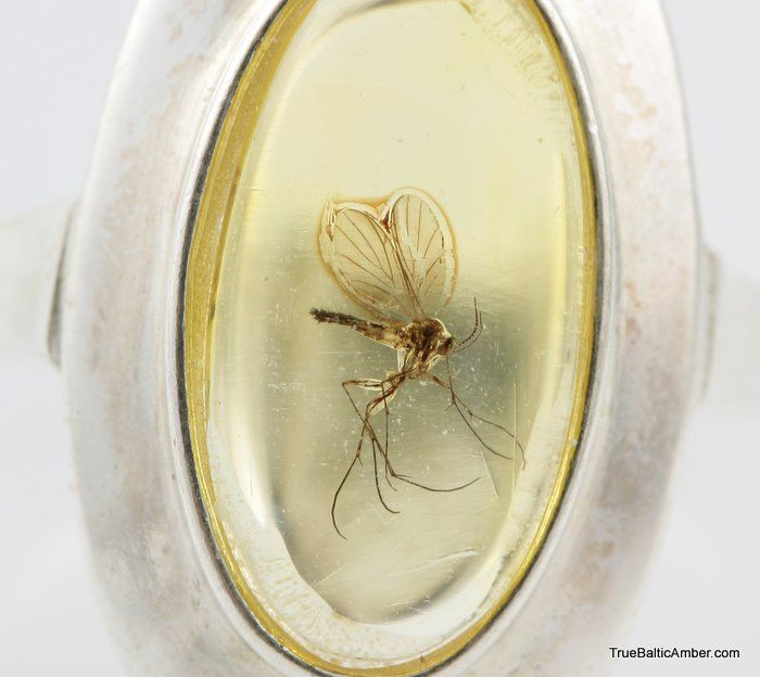 Baltic amber silver ring with fossil insect inclusion ----- sick. like jurassic park yo.