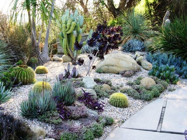very pretty outdoor succulent garden