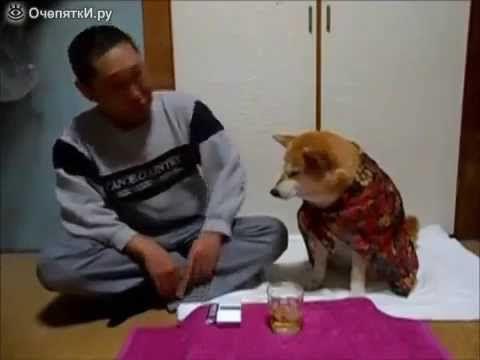 Собака не дает хозяину выпить