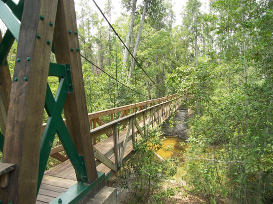 Suspension Bridge at Munson Pool near Milton, Florida