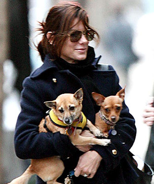 Poppy & Ruby (Adopted by Sandra Bullock) | 20 Celebs And Their Adorable Adopted Pups