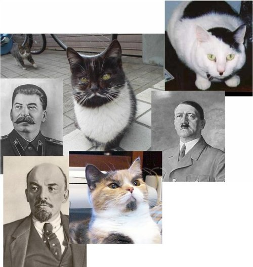 Dictator Cats; hahaha! They all have accurate facial hair!! Check out the mustache on the first cat! Or the goatee on the third! Or the weirdly accurate hair cut on the hitler cat... XD