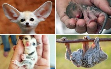 Σπάνια μωρά ζώα που δε συναντάς συχνά