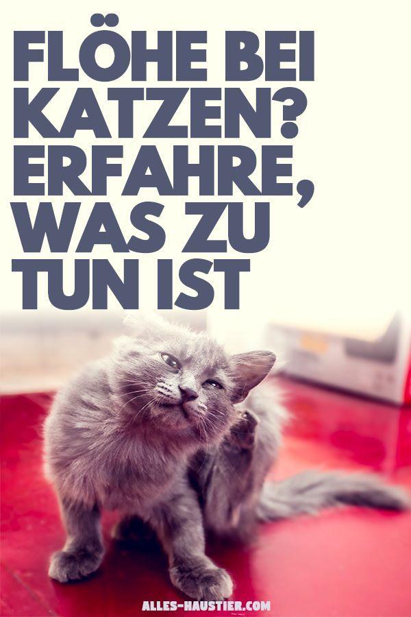 Flohe Bei Katzen Und In Der Wohnung Bekampfen Katzen Flohe Katzen Katzengesundheit