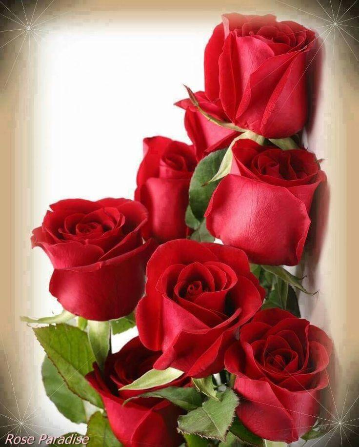 Новогодние, розы картинки вертикальные с понедельника