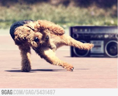 Heres a breakdancing dog: Animal Lovers, Pet Photography, Break Dance, Breakdanc Dogs, Dance Photos, Pet Photos, Jernej Lasic, Break Dancing, Funny Pet